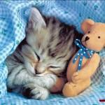 CAT TEDDY