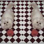 CATS2IMS