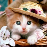 Cat_Fancy