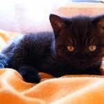 Daydream_Kitty