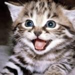 Khout_Kitten