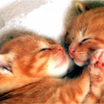 Kittys,_brothers