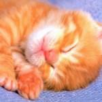 Slipe_cat