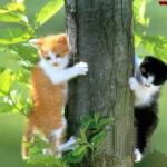 TREE CATS
