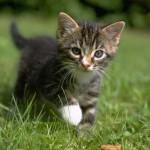 cats (10)