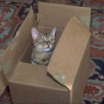 cats (11)