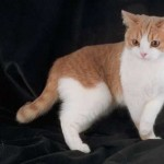 cats (116)