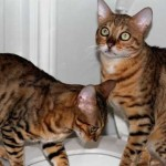 cats (129)