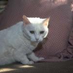 cats (13)