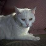 cats (14)