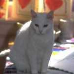 cats (15)
