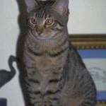 cats (18)