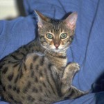 cats (19)