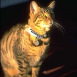 cats (22)