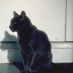 cats (24)