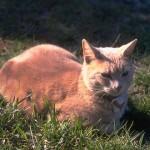 cats (25)