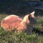 cats (26)