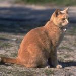 cats (27)