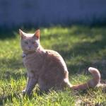 cats (28)