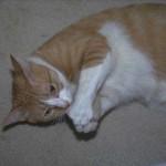 cats (3)