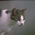 cats (33)