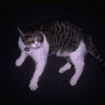cats (45)