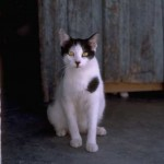 cats (47)