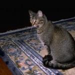 cats (49)