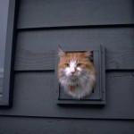 cats (50)