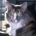 cats (57)
