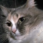 cats (58)