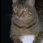 cats (6)