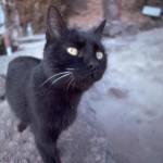 cats (61)