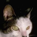 cats (64)