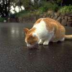 cats (65)
