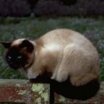 cats (66)