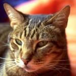 cats (67)