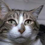 cats (68)