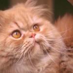cats (69)