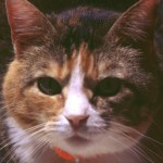 cats (71)