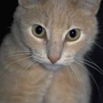 cats (72)