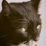 cats (73)