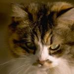 cats (74)