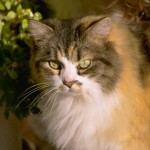 cats (75)