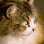 cats (76)