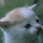 cats (8)
