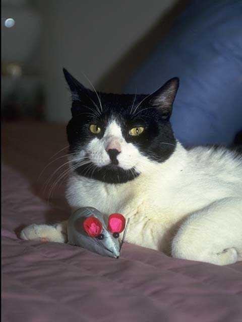 box for cat litter